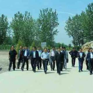 甘肃省陇南市委副书记张旭晨调研武都区油橄榄产业开发工作