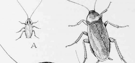 马占凯:唯一正确方法之灭蟑螂 灭蟑螂最有效的方法和灭蟑螂小窍门