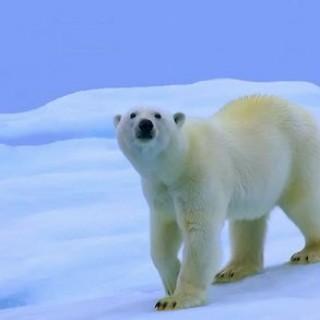 记录自然与人类变化的《北极熊的全球温室化之旅》即将登陆中国