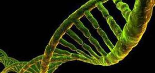 发现智力基因,科学家设想创造超级智能