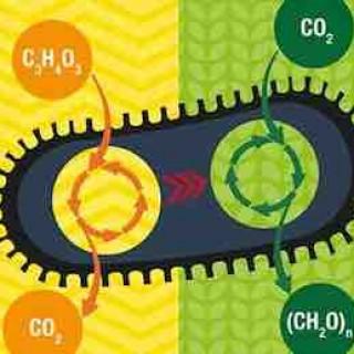"""吃的是气,吐的是糖,最新黑科技让细菌变身""""二氧化碳收割机"""""""