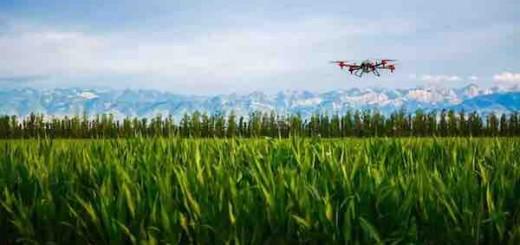 支付宝推出一项新的农村服务:预约无人机洒农药服务