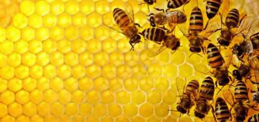 Facebook已经过时:蜂巢新网络崛起 未来属于蜂群思维