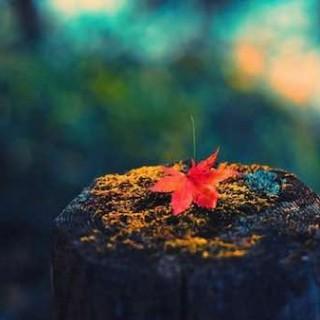 青年诗人、作家胡海升:散不去的千年记忆在秋雨夜